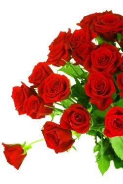 Цветы дона