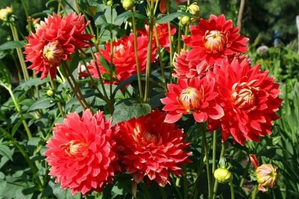 Все цветы на букву г