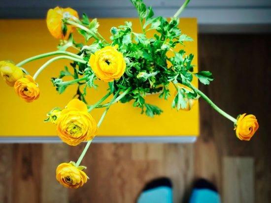 Комнатный цветок с желтыми цветами