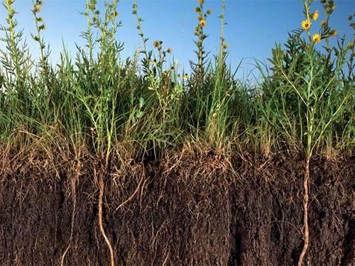 Сидераты для песчаной почвы