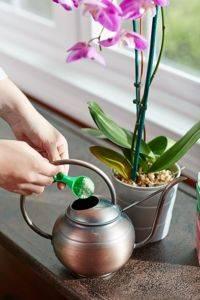 Чем удобрять орхидею в домашних условиях