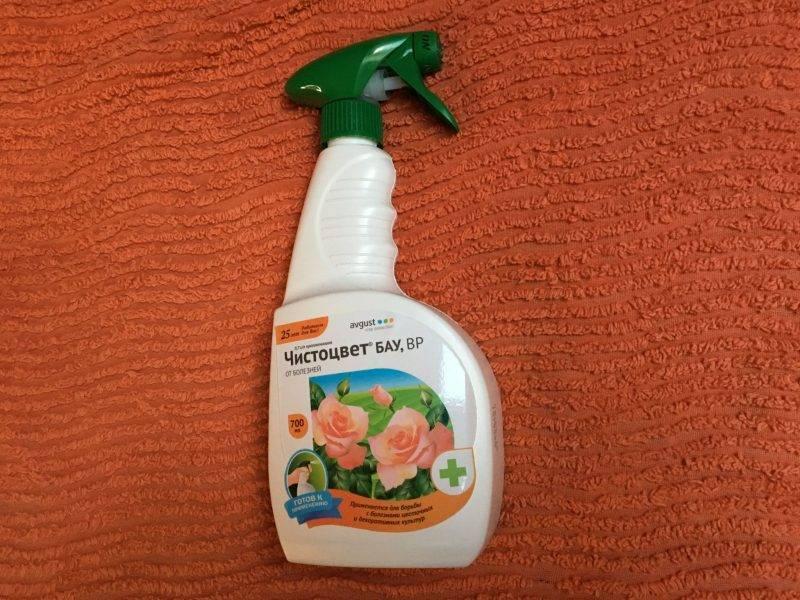 Выращивание петунии в домашних условиях