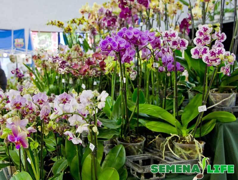 Как сажать семена орхидеи
