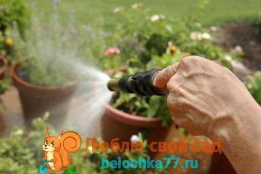 Янтарная кислота для растений инструкция по применению