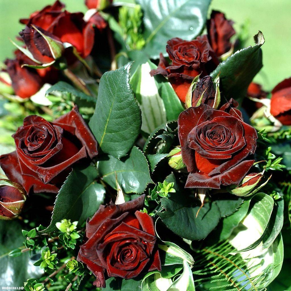 Черно красные розы