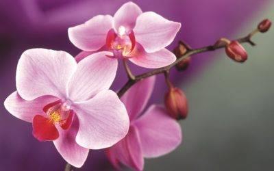 Циркон для орхидей как применять