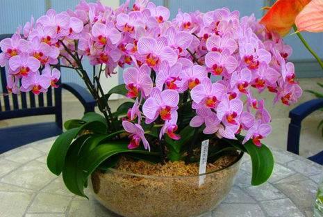 У орхидеи опали листья что делать