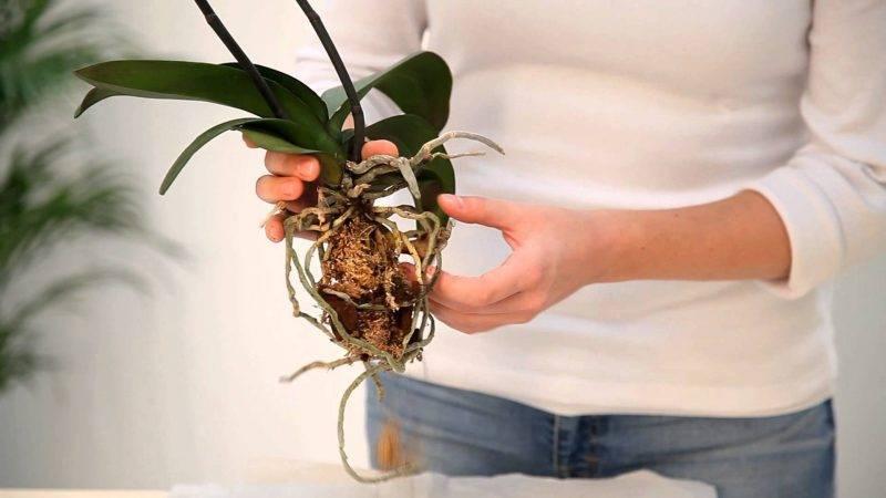 Кашпо для орхидей как использовать