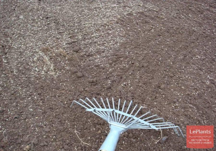 Как садить газонную траву семенами