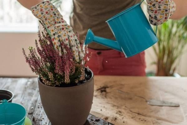 Можно ли поливать дрожжами комнатные цветы