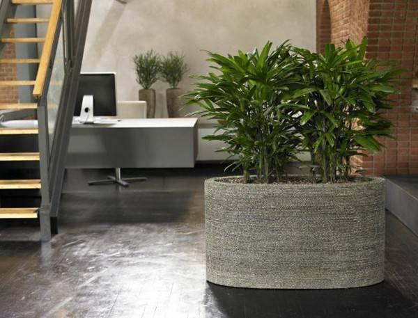 Теневыносливые растения для дома