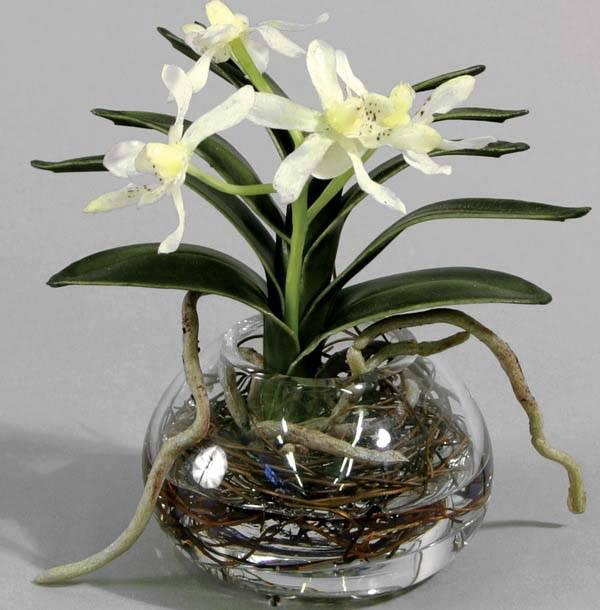 Земля для орхидеи в домашних условиях