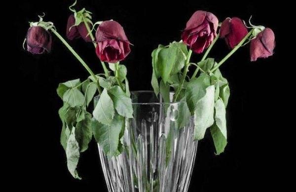 Как дольше сохранить розы