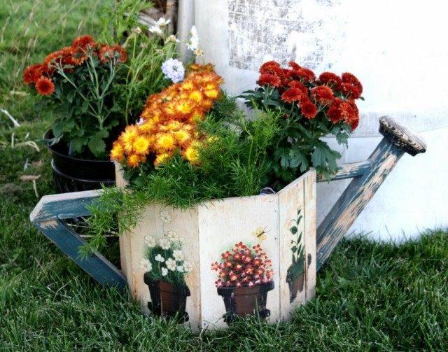 Хризантема домашняя уход в домашних условиях