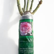 Розы сибири каталог