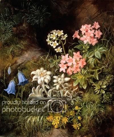 Эдельвейс цветок легенда