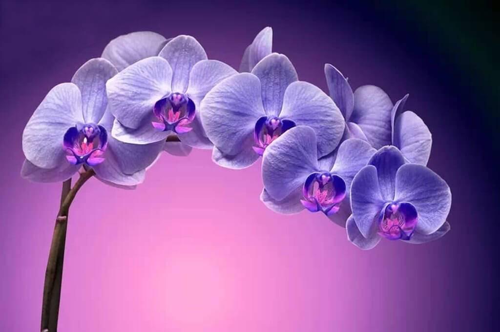 Можно ли дома держать орхидеи приметы