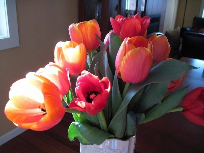 Когда можно сажать тюльпаны