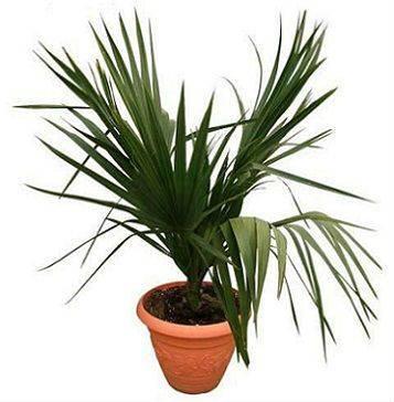 Красивые пальмы