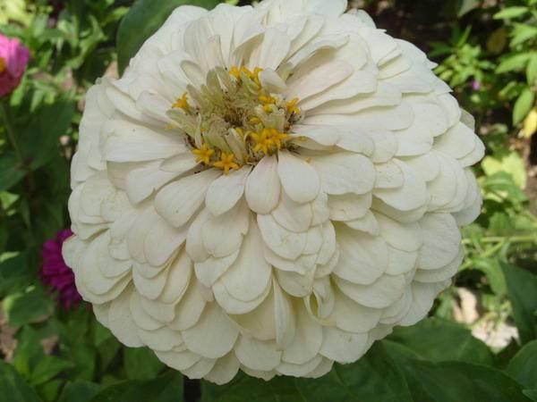 Цветы цветущие в августе