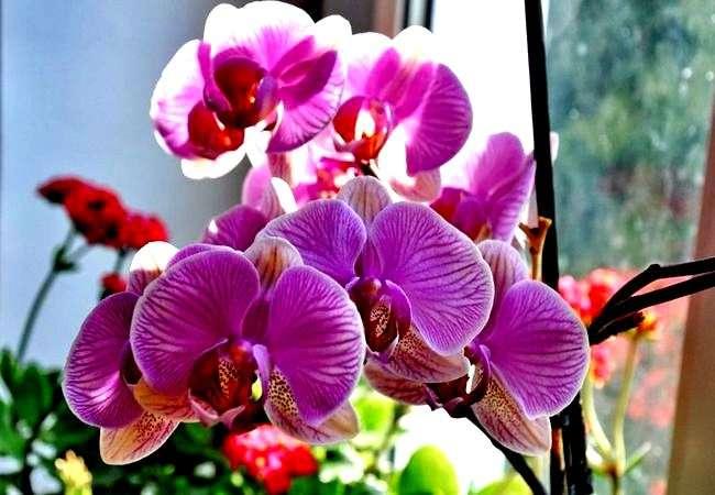 Гниет сердцевина у орхидеи что делать