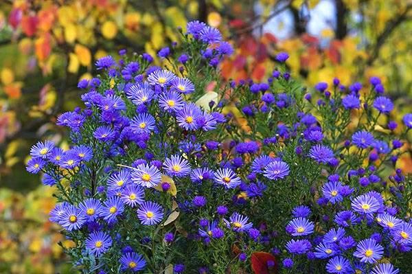 Желтые садовые цветы многолетники