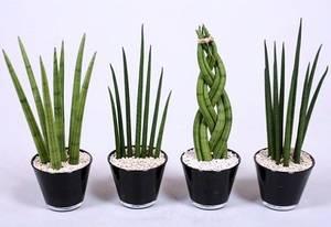 Комнатные растения которые любят темноту