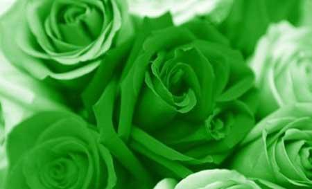 Розы символ