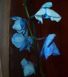 Почему вянут листья у орхидеи фаленопсис