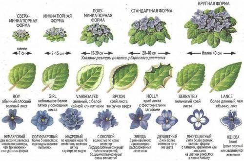 Как узнать какой цветок