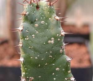 Как вывести щитовку с комнатных растений