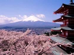 Что символизирует сакура