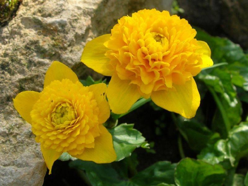 Название садовых цветов