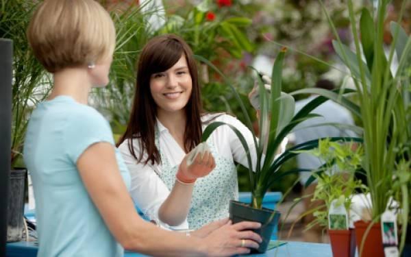Комнатные растения солнцелюбивые