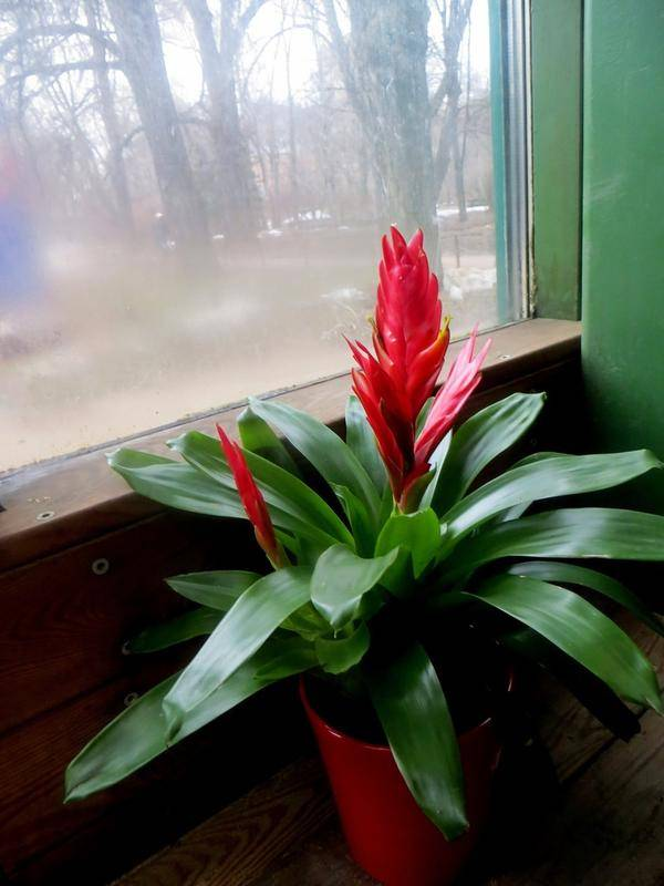 Редкие комнатные цветы