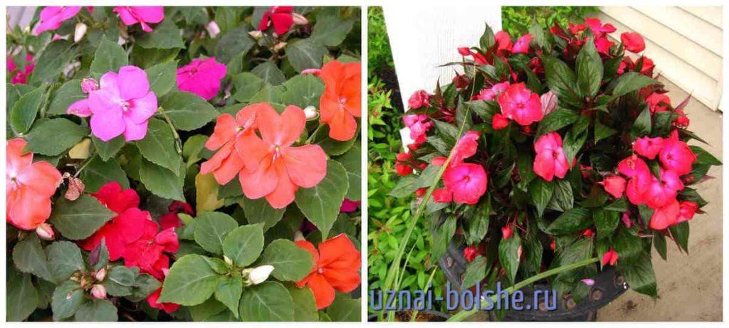 Какие бывают комнатные цветы
