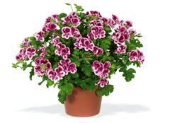 Подкормки для цветов садовых