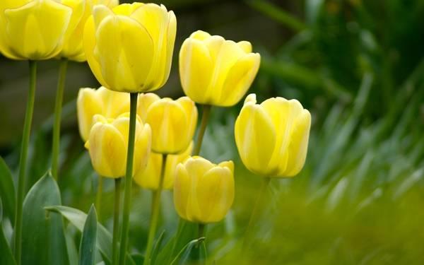 Желтые многолетники