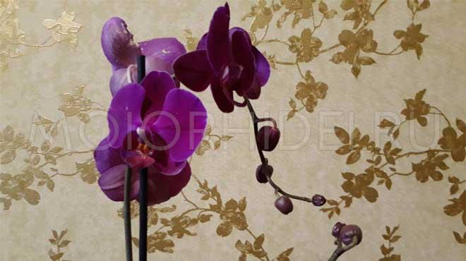 Можно ли опрыскивать орхидею