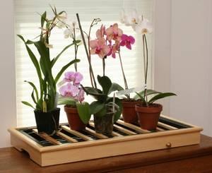 Чем подкармливать цветы комнатные