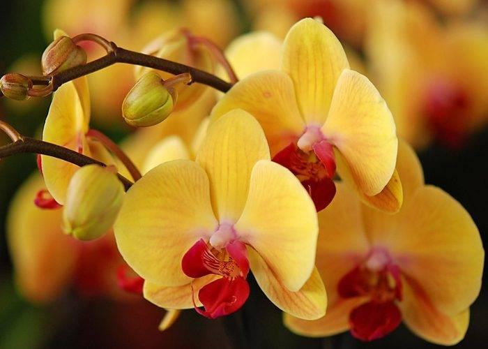 Орхидея зацвела примета