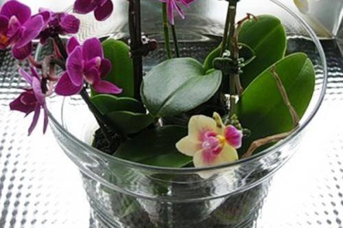 Уход за цветущей орхидеей в домашних условиях