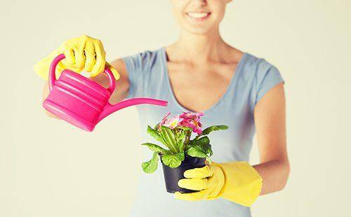Янтарная кислота для комнатных растений