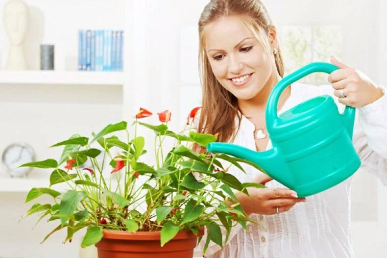 Как поливать цикламен