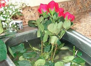 Как оживить розы если они завяли
