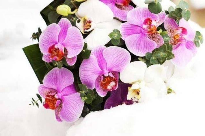 Приметы орхидея в доме
