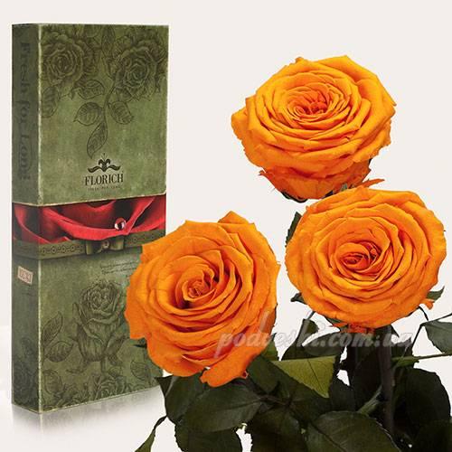 Розы которые не вянут 5 лет