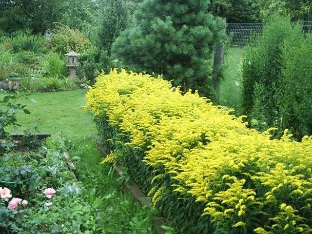 Цветы для огорода