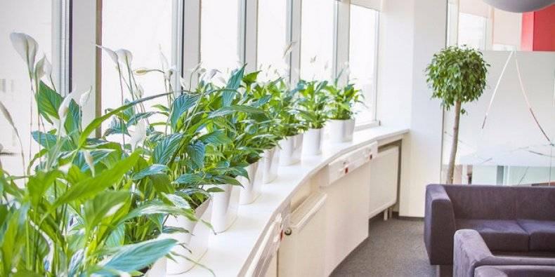 Цветы в горшках в офис