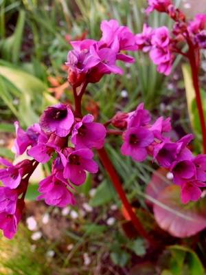 Полевые цветы с названиями
